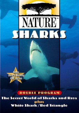an introduction to the nature of sharks I'm a shark just the name strikes fear in the heart well the same goes for sharks when they make a mistake relaxing nature 244 watching.